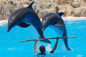 dolphin_trainer