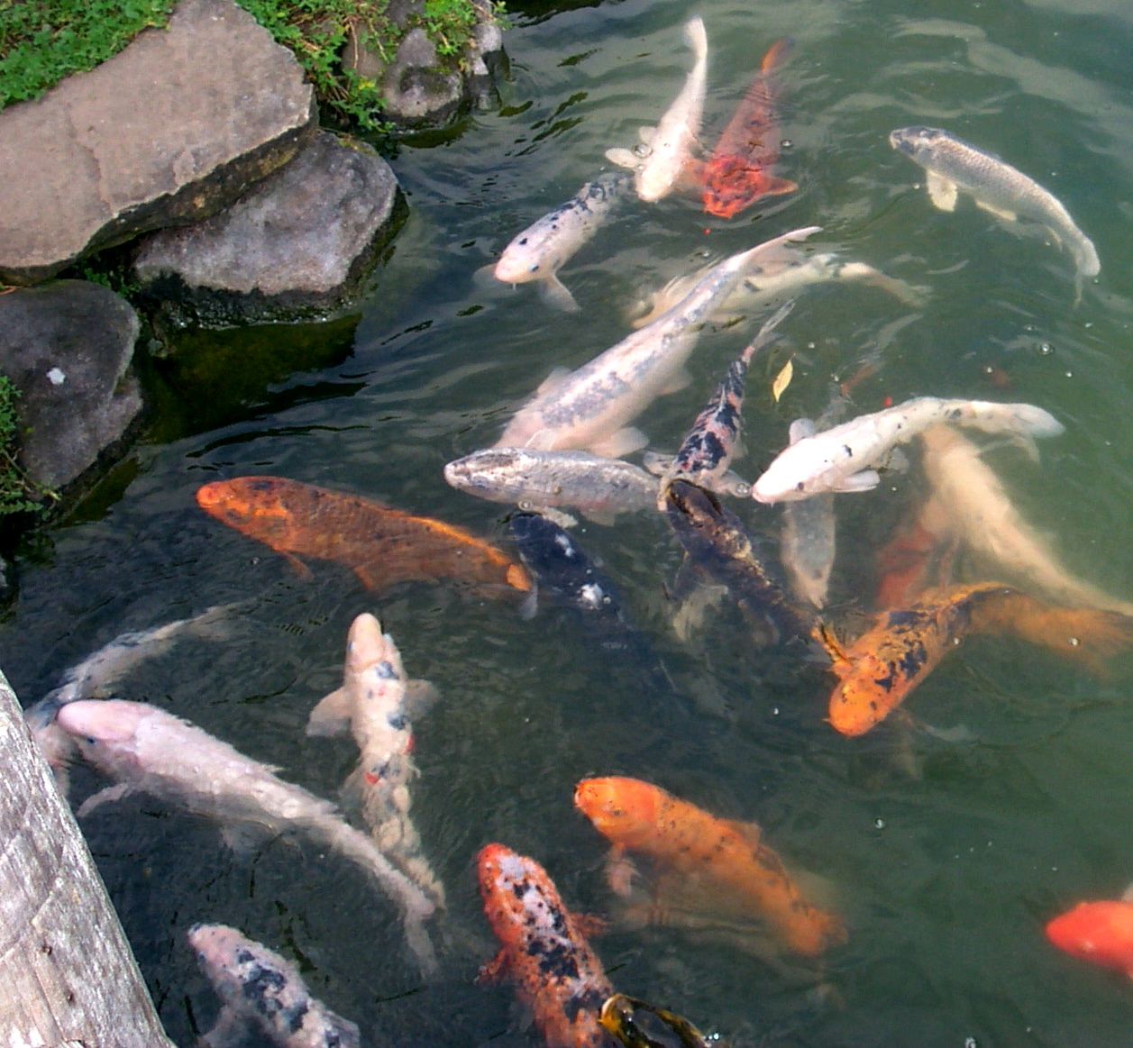 Easy lesson on singular and plural forms in english look for Plural of fish