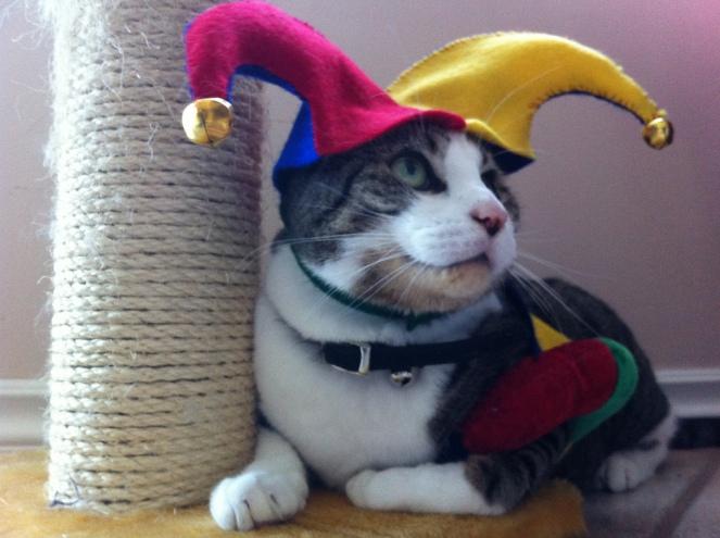 fool cat
